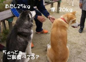 2010 11月愛ハス会 018a