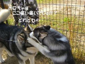 2010 11月愛ハス会 054