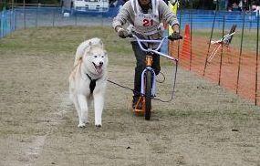 2010 11月ギグレースin京都 474
