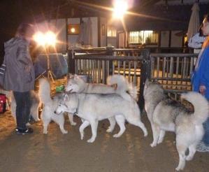 2010 11月ギグレースin京都 848