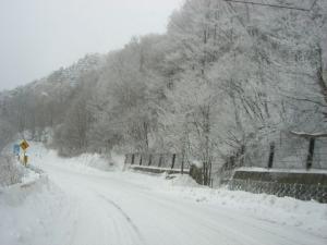 2011 1月カーロ菅平 127