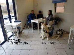 2011 1月愛ハス&チビハス 072a