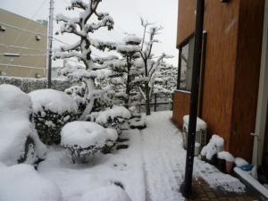 2011 1月愛ハス&チビハス 205