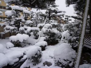 2011 1月愛ハス&チビハス 203