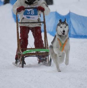 2011 きぬがわ犬橇大会 365