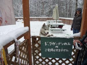 2011 きぬがわ犬橇大会 014