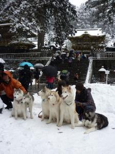 2011 きぬがわ犬橇大会 061