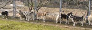2011 4月ギグレース美山 853a