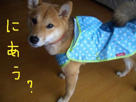 ichi2い