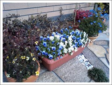 冬の花々2