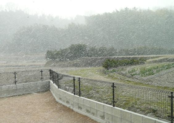 1月24日の風景 翌日はお庭が真っ白~♪