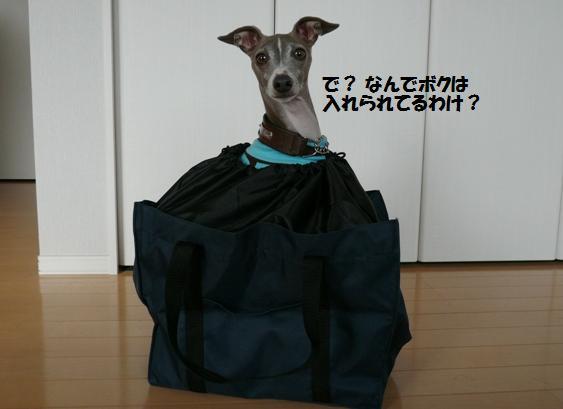 何かで貰ったエコバッグ。