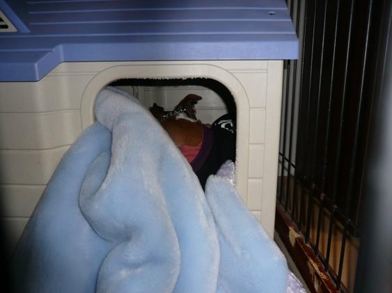 2頭が出入りするので、毛布が乱れる。。