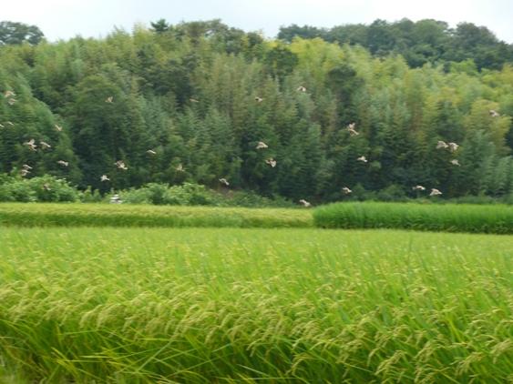 窓からの風景。…超田舎だな。。