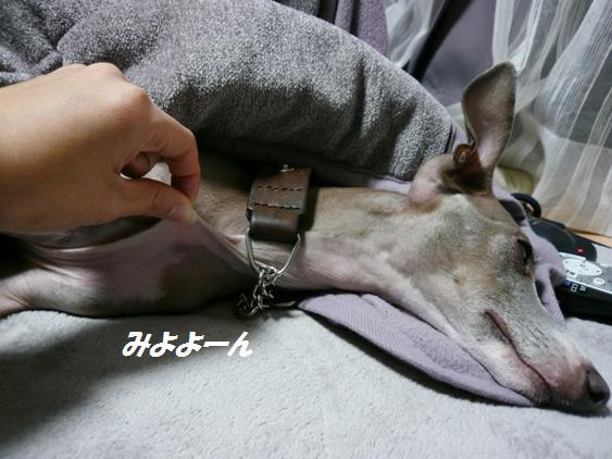 トトはコタツから頭を出したり入れたり、自分で体温調節します