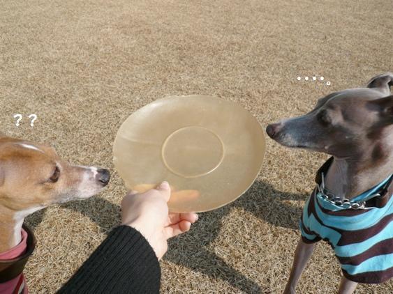 以前登場した鉢の水受け皿にそっくり!?