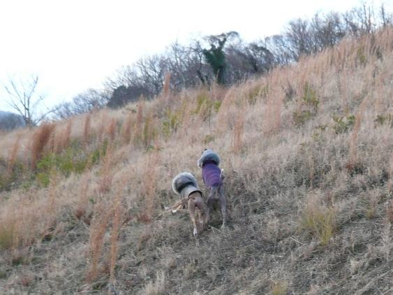 年明けには、キレイに草刈りしてくれてました
