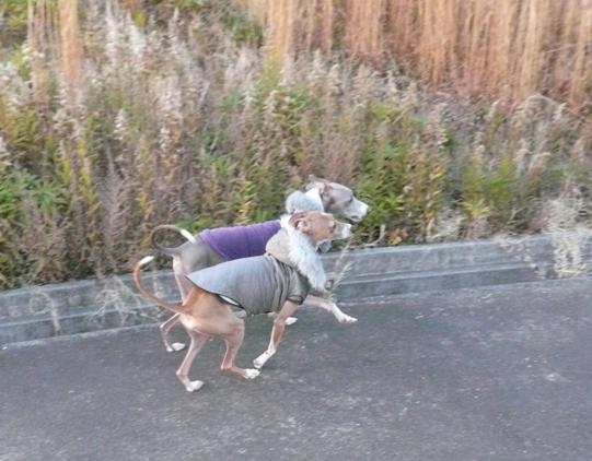 「犬禁止」や「糞は持ち帰りましょう」などの看板も無し!