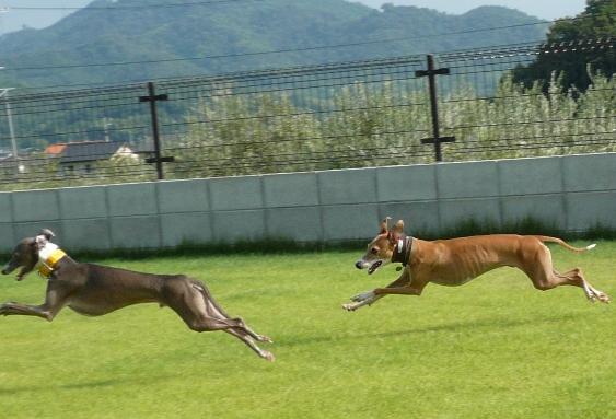 伸びる飛行犬