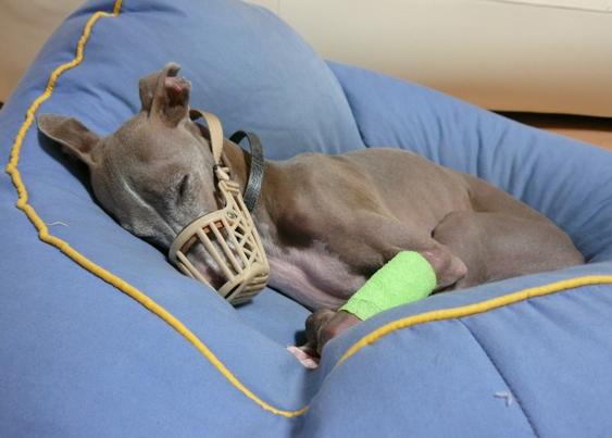 病院で付けてくれた黄緑色のくっつく包帯。うふ、可愛い♪