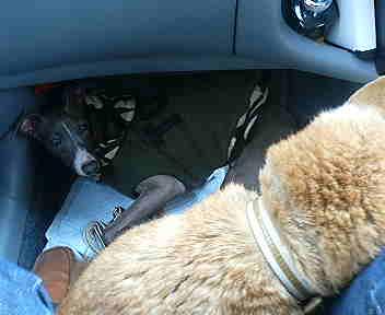 分かりにくいですが、車で移動中の写真です。。。