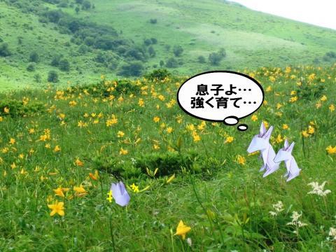 うさぎと草原
