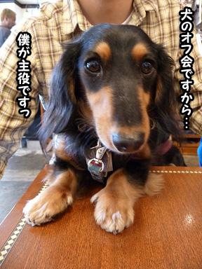 2008 11 22 オフ会デビュー2 blog03のコピー