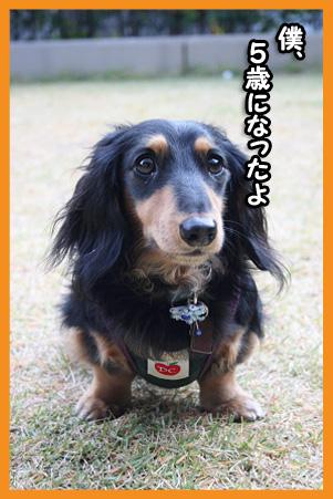 2008 11 29 モネお預かり blog02のコピー