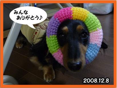 2008 12 08 百香寝返り blog02_edited-1