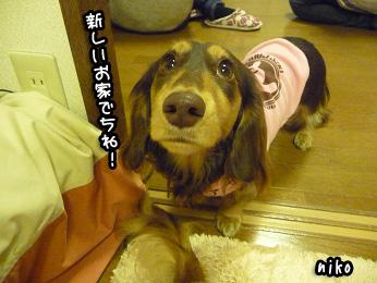 2008 12 28 忘年会 blog02のコピー