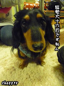 2008 12 28 忘年会 blog03のコピー