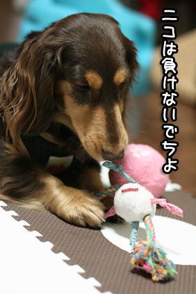 2009 02 09 バレンタイン blog03のコピー