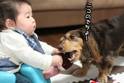 2009 02 17 ニコ2歳 blog10のコピー