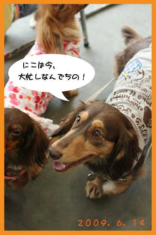 2009 06 14 wanbanaオフ会 blog01のコピー