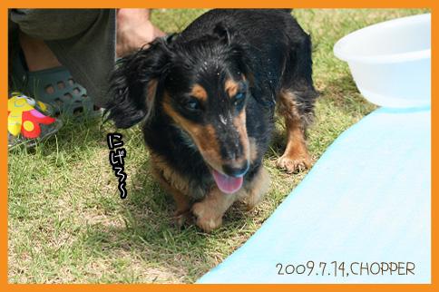 2009 07 14 水遊び2 blog11のコピー