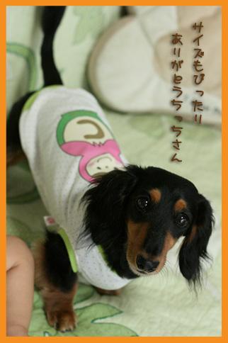 2009 08 04 お洋服 blog11のコピー