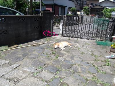 asagaonet1005277.jpg