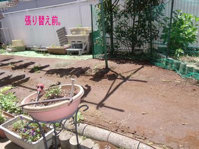 green1005215.jpg