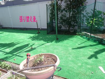 green1005216.jpg