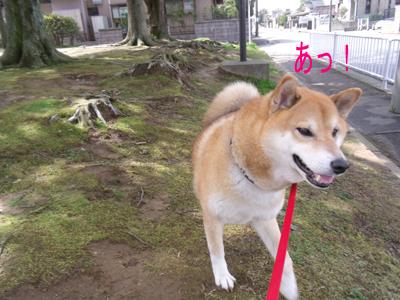 kyoufuubi1003215.jpg