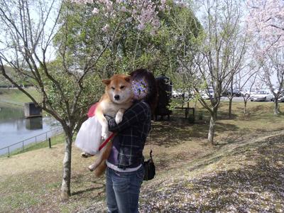 sakuraazu10040617.jpg