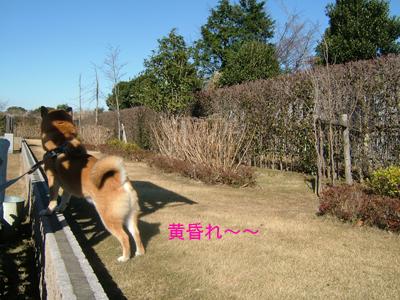 tasogare3.jpg
