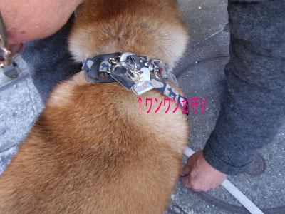 wanwanomamori1002071.jpg