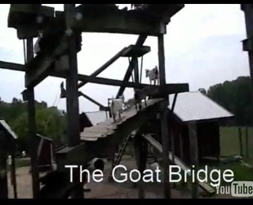 羊ブリッジ