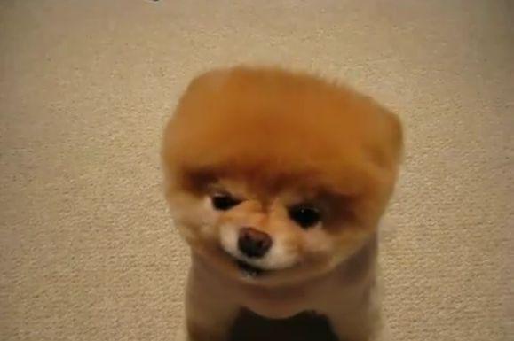 キュート犬