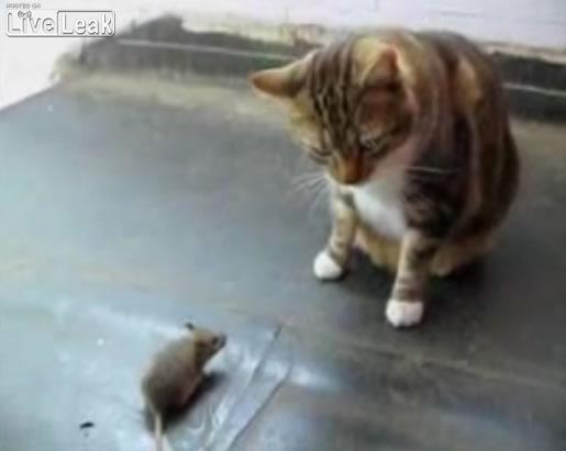 mousecat.jpg