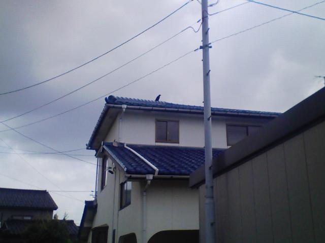 20090625 002