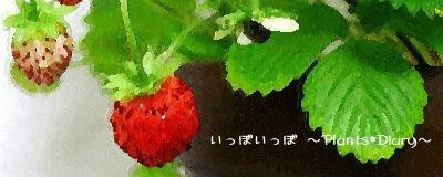 http://blog-imgs-32.fc2.com/i/p/p/ippoipponeil/201109091221203df.jpg