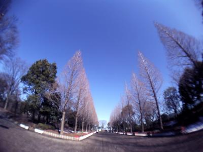 20110216v12.jpg