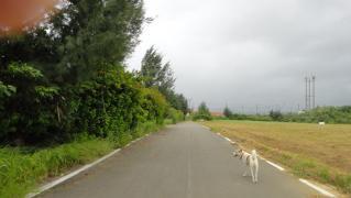 台風1日 004